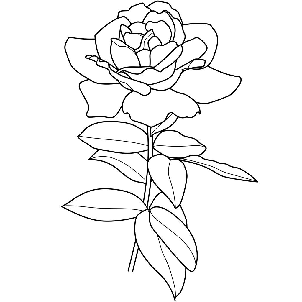 バラ01:黒線バージョン