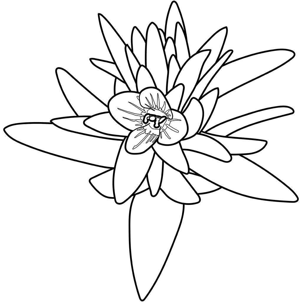 タチイヌノフグリ:黒線バージョン